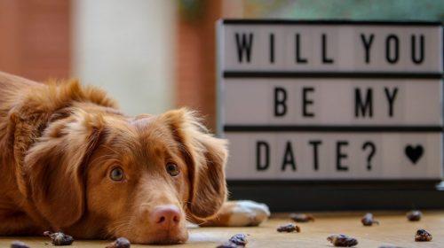 idei-de-amenajare-a-casei-de-valentines-day-ziua-indragostitilor-si-dragobete